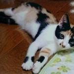 小樽 新しい飼い主探し 里親募集 子猫 3ヶ月 メス 三毛