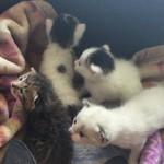 0子猫集合写真 (1)