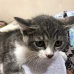 新光子猫① (1)